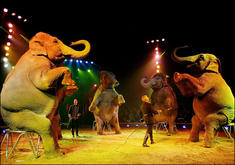exotic-animals-circus-banned-1.jpg