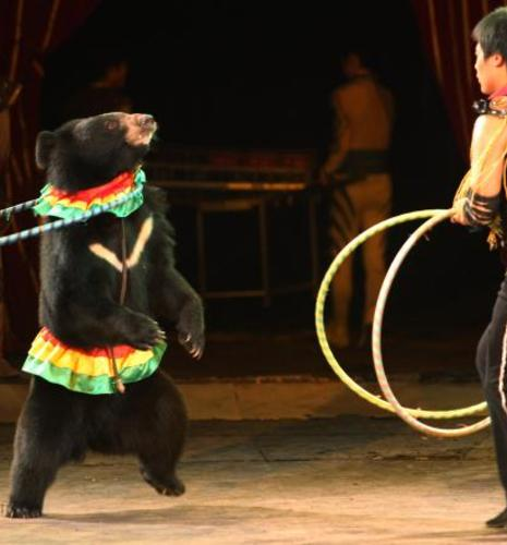 exotic-animals-circus-banned-6.jpg